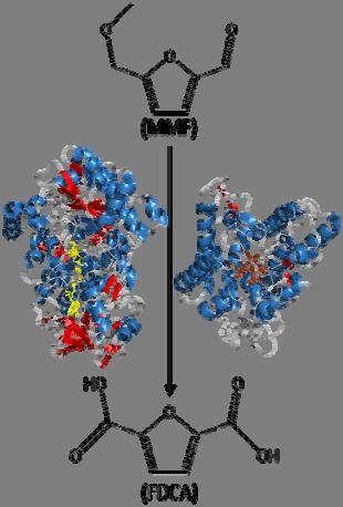 Enzymatic production of 2,5-furandicarboxylic acid from 5-methoxymethylfurfura