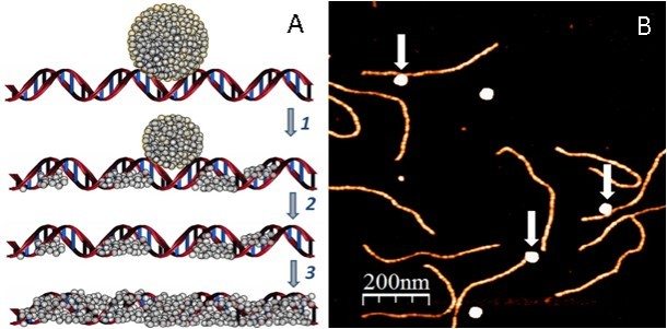 New Generation of DNA-Based Circuits and Electrical Devices