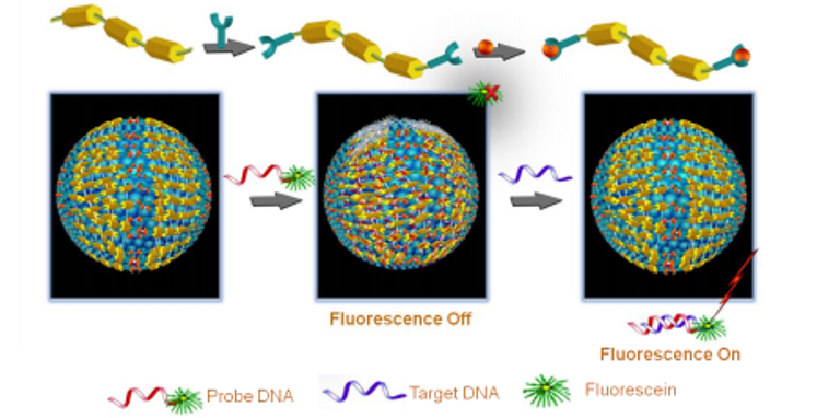 Simple, Cost-Effective DNA Detection Kit