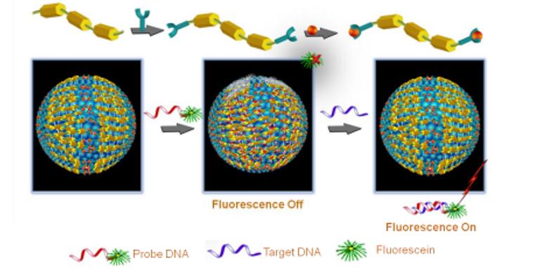 Simple, Cost-Effective Bio-Sensor for DNA Detection
