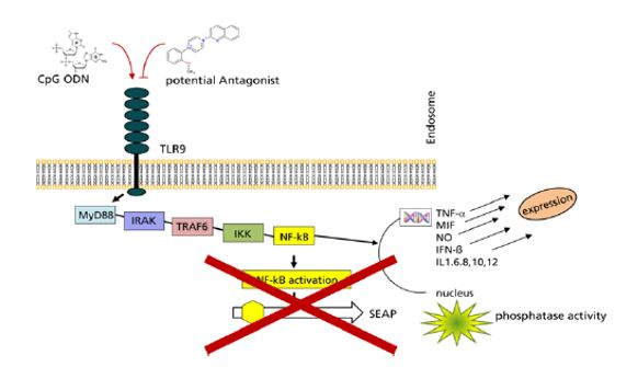 Small Molecules Antagonists Of Toll Like Receptor 9 For Treatment Of viral infections, dermatologic, autoimmune and inflammatory diseases