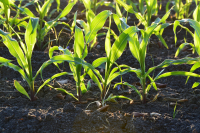 Seeking soil health solutions which reduce the reliance on synthetic agrochemicals applied to and/or improve soil health whilst maintaining yield and quality
