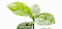 Seeking valid alternatives to linear alkyl benzene sulfonate (LAS) surfactant in detergent formulations